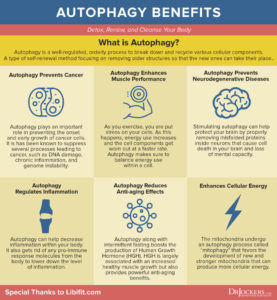 Autophagy-benefits-1